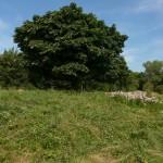 Der er slået under kastanjetræet